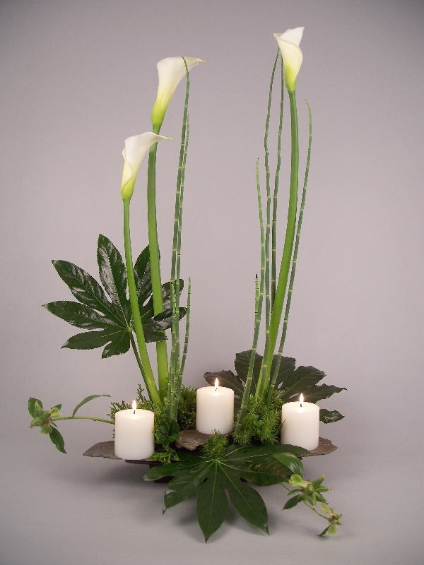 how to grow calla lilies from seed pods